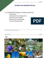 flor morfologia
