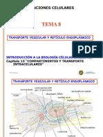 Tema 8 Transporte vesicular y Retículo Endoplásmico.ppt