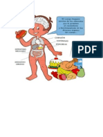 Apartos Digestivo y Circulatorio