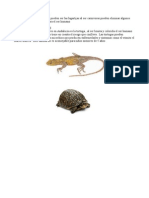 Trabajo de Ciencias Reptiles