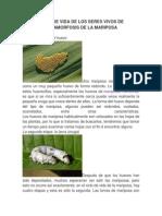 CICLO DE VIDA DE LOS SERES VIVOS DE METAMORFOSIS DE LA MARIPOSA.docx