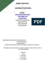 Quinta aula de parasitologia.ppt