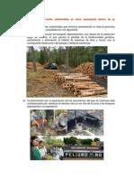 Problemas medio ambientales.docx