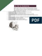 Subdivisiones de la Anatomía.docx