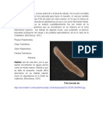 Desarrollo Fauna.doc