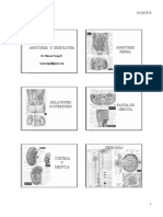 Anatomia / urologia