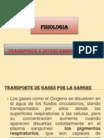 intercambio de gases.pptx