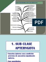 XII SISTEMATICA.pptx