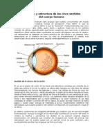 2. Anatomía y estructura de los cinco sentidos.docx