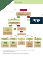 Anemia DiagnosticTree.pdf