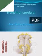 curs-3-trunchiul-cerebral (2).ppt