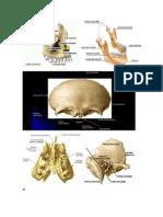 esqueleto.docx