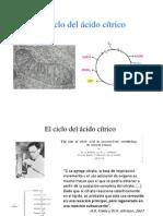 ciclo_del_cido_ctrico.ppsx