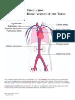 ph_look_circulatory_torso.pdf