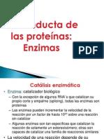 11._Enzimas.pptx