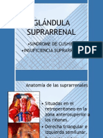 5.-SUPRARRENAL.ppt