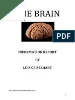 luis brain report