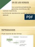 La micología.ppt