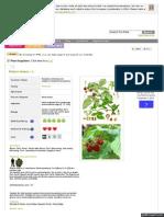 www_pfaf_org_user_Plant_aspx_LatinName_Rubus_idaeus.pdf