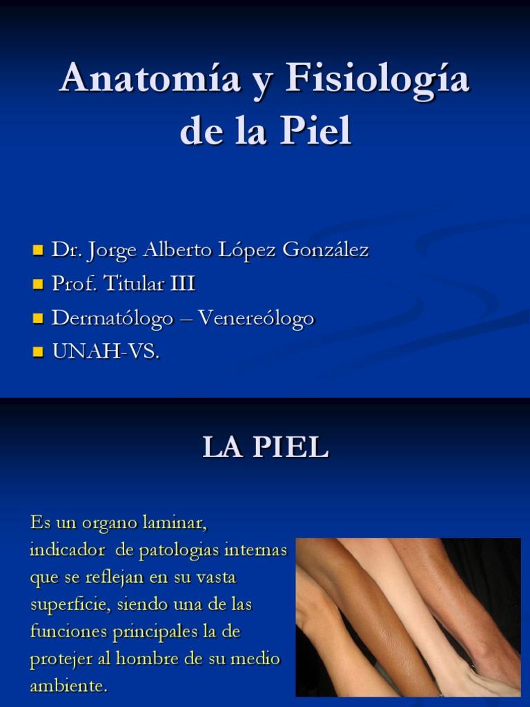 Asombroso Anatomía Y Fisiología De La Piel Patrón - Anatomía y ...
