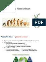 11 - acidos nucleicos.pdf
