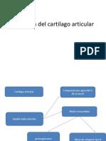 Fisiologia del cartilago articular.pptx