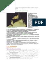 bolilla nº 03 dipteros, homopteros, nemaltèmitos.doc