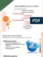 1. Moleculas Biológicas.pptx