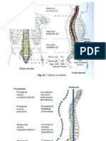 Coluna Vewrtebral.pptx