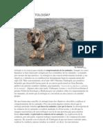 QUÉ ES LA ETOLOGÍA.pdf