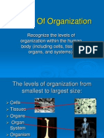 levels of organization 2