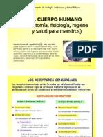 T11-Sentidos.pdf