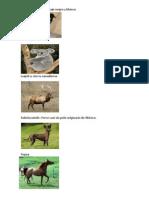 ANIMALES CON LETRAS RARAS.docx