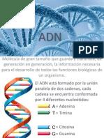 ADN.pptx