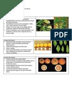 Deficiencias de nutrientes en Cítricos.docx
