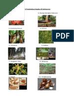 10 tumbuhan langka di Indonesia..docx