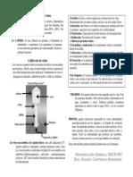 virus resumen.pdf