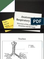 Anatomy Trakea, Bronkus Dan Pulmo