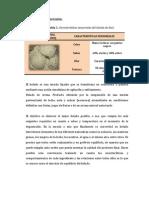 ELABORACION DE HELADOS ÚLTIMO.docx