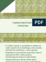 0 2009 histologia vegetal_______1 (2).ppt