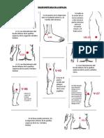 dolor-parte-baja-de-la-espalda.pdf