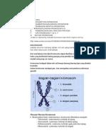 sitogenetika