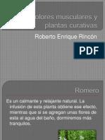 Dolores musculares y plantas curativas.pptx