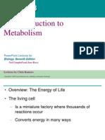 08- Metabolism Text (1)