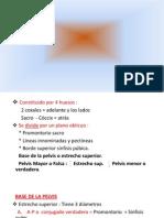 Pelvis.pdf