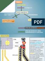 esteroides pepe.pptx