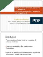 Alteração dos metabólitos secundários em plantas de Hypericum.ppt