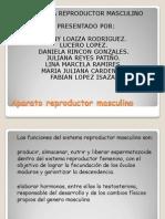 dipositivas expo aparato reproductor masculino.pptx