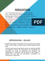 LA REPRODUCCION EXPOSICION.pptx