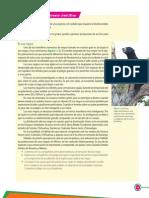 el oso negro.pdf